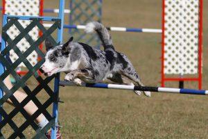 Axel jumping